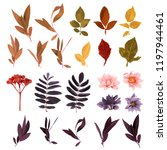 set of autumn plants and leaves.... | Shutterstock .eps vector #1197944461
