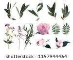 set of  peony  plants and... | Shutterstock .eps vector #1197944464