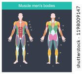 muscle is the part of the body... | Shutterstock .eps vector #1198009147