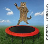 Stock photo the big cat is jumping on a red trampoline in a meadow 1198013197