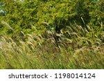 ...   Shutterstock . vector #1198014124