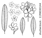 hand  drawn tropical flowers...   Shutterstock .eps vector #1198030144