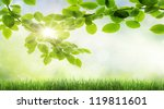 natural green background with... | Shutterstock . vector #119811601