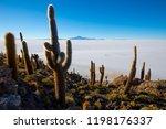 cactus on incahuasi island ...   Shutterstock . vector #1198176337