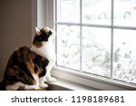 Female  Cute Calico Cat On...