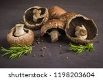 forest picking mushrooms on the ... | Shutterstock . vector #1198203604