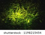 dried nori seaweed laminaria... | Shutterstock . vector #1198215454