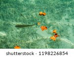 mountain lake with fish... | Shutterstock . vector #1198226854
