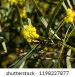 soft  beautiful  fluffy ... | Shutterstock . vector #1198227877