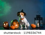 dog jack russell in costume for ... | Shutterstock . vector #1198336744