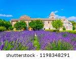 Lavender Field In The Monaster...