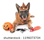 german shepherd and halloween... | Shutterstock . vector #1198373734