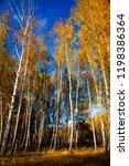 beautiful autumn birch grove on ... | Shutterstock . vector #1198386364