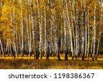 beautiful autumn birch grove on ... | Shutterstock . vector #1198386367