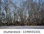 beautiful world. winter... | Shutterstock . vector #1198431331