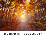 autumn forest scenery with road ... | Shutterstock . vector #1198657957