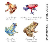 hand drawn colored frog set... | Shutterstock . vector #1198720111