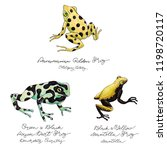 hand drawn colored frog set... | Shutterstock . vector #1198720117
