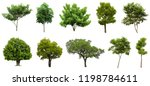 Stock photo collection beautiful trees isolated on white background suitable for use in architectural design 1198784611