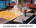 corn in bulk carrier hold....   Shutterstock . vector #1199034787