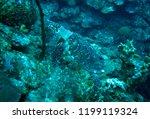 wild hawksbill turtle grand...   Shutterstock . vector #1199119324