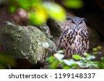 eurasian eagle owl   bubo bubo   Shutterstock . vector #1199148337