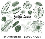 tropical leaves collection.... | Shutterstock .eps vector #1199277217
