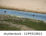 panorama and wildlife on the... | Shutterstock . vector #1199313811