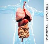 3d man render   anatomy showing ... | Shutterstock . vector #1199345011