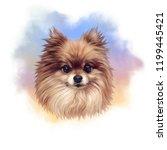 Pomeranian. Illustration Of A...