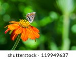 little colorful butterfly on... | Shutterstock . vector #119949637