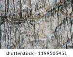 bark tree texture | Shutterstock . vector #1199505451