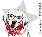 Portrait Of Labrador Retriever ...