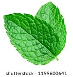 mint leaves isolated on white.... | Shutterstock . vector #1199600641