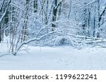 winter forest with snow and... | Shutterstock . vector #1199622241
