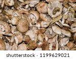 field champignons. edible...   Shutterstock . vector #1199629021