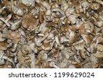 field champignons. edible...   Shutterstock . vector #1199629024