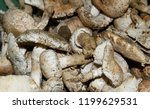 field champignons. edible...   Shutterstock . vector #1199629531