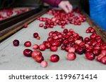cranberries at the fairgrounds   Shutterstock . vector #1199671414