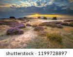 Veluwe Sunset Over Heathland...