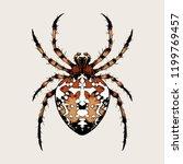 Spider  Garden Spider  Diadem...