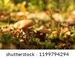 mushrooms in the forest. many... | Shutterstock . vector #1199794294