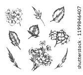 set of vector hand drawn...   Shutterstock .eps vector #1199846407