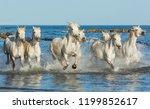 white camargue horses galloping ... | Shutterstock . vector #1199852617