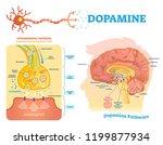 dopamine vector illustration.... | Shutterstock .eps vector #1199877934