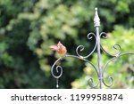 female northern cardinal... | Shutterstock . vector #1199958874