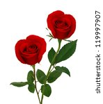 Bbeautiful Red Rose Flowers...