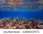 coral reef in egypt with color... | Shutterstock . vector #1200015571