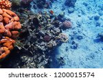 coral reef in egypt with color... | Shutterstock . vector #1200015574