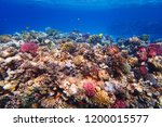 coral reef in egypt with color... | Shutterstock . vector #1200015577